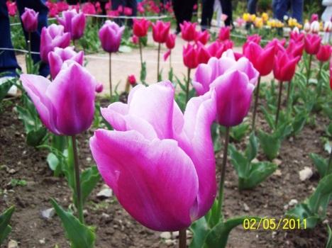 Крым, парад тюльпанов 2011